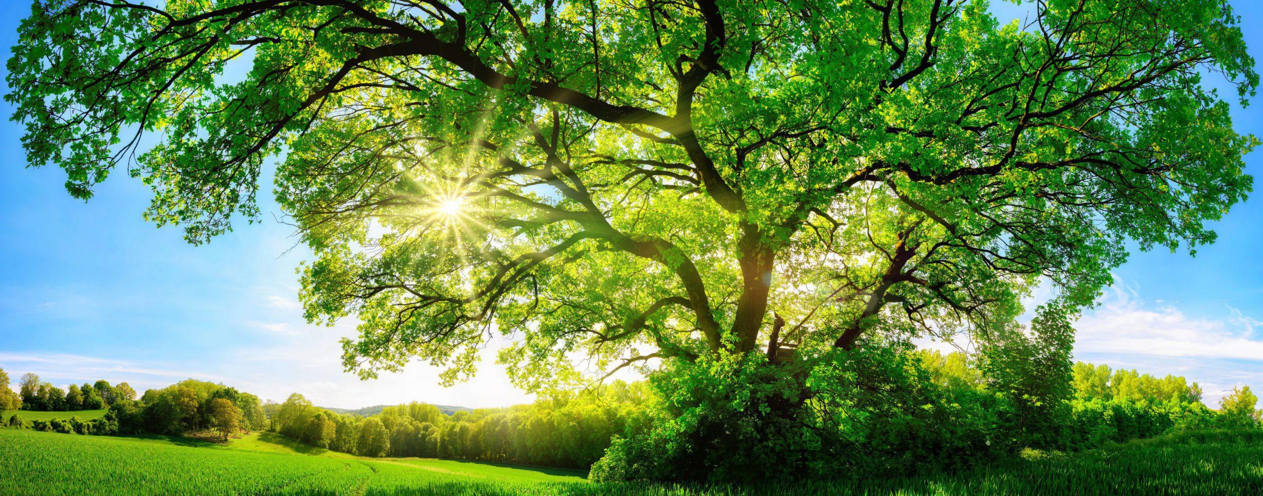 Terug naar je eigen kern met Integrated Energy Therapy – interview door Sterke Branding